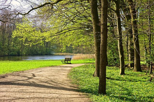 Park, Path, Bench, Trees, Grass, Lake, Landscape