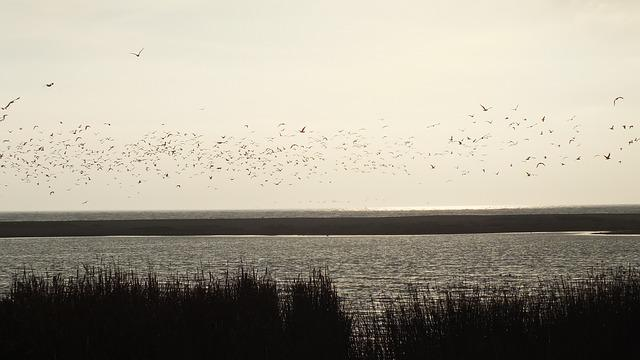 Wetland, Birds, Nature, Landscape