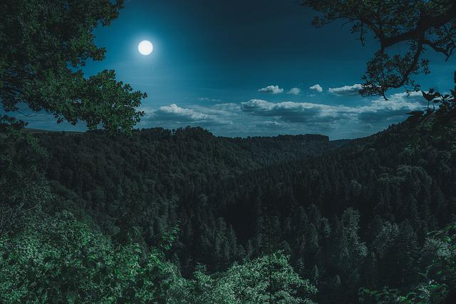 Nature, Forest, Landscape, At Night, Black Forest, Dark