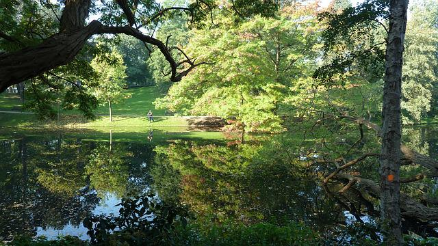 Bremen, Citizens Park, Nature, Landscape, Autumn, Tree