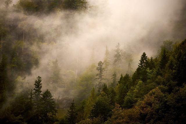 Nature, Landscape, Forest, Clouds, Fog, Mood, Trees