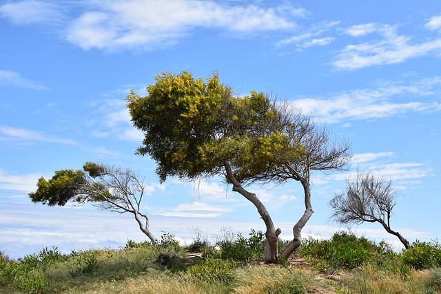 Trees, Dune, Landscape, Nature, Sky, Clouds