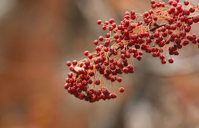 Flowers, Winters, Colors, Cold, Landscape, Field