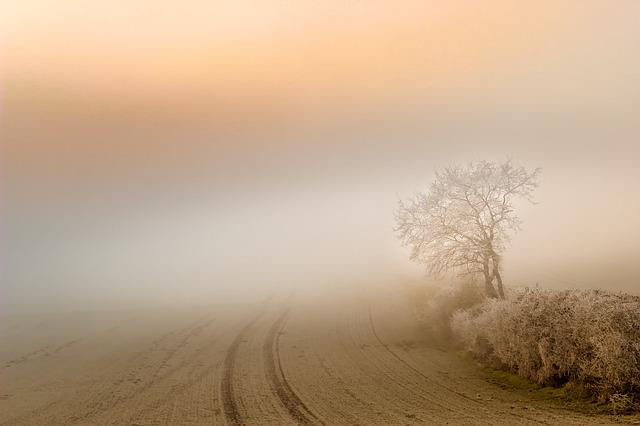 Fog, Dawn, Landscape, Sunset, Nature, Tree, Structure