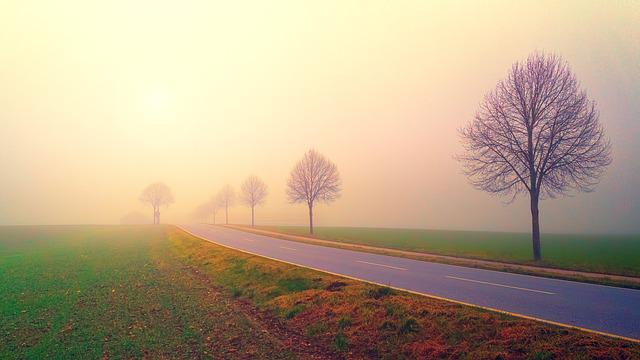 Dawn, Road, Avenue, Fog, Landscape, Trees, Grass