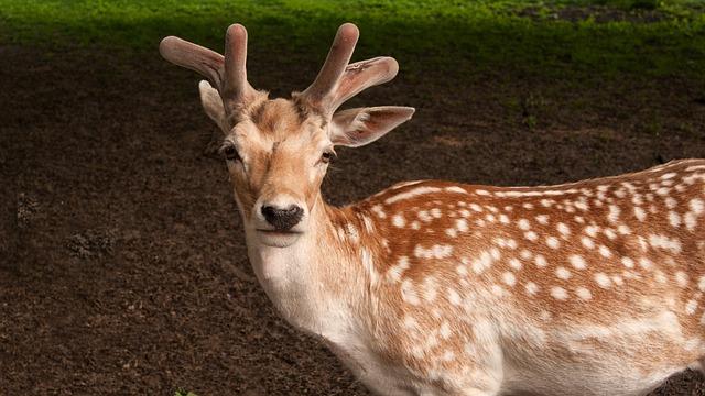 Deer, Ree, Nature, Mammal, Fauna, Animal, Landscape