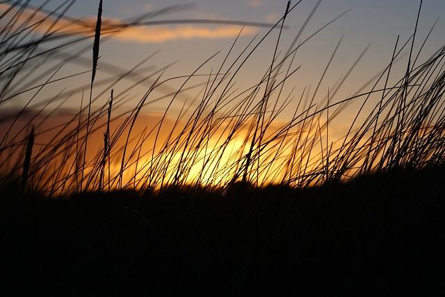 Sunset, Silhouette, Wild Grass, Dusk, Landscape, Nature