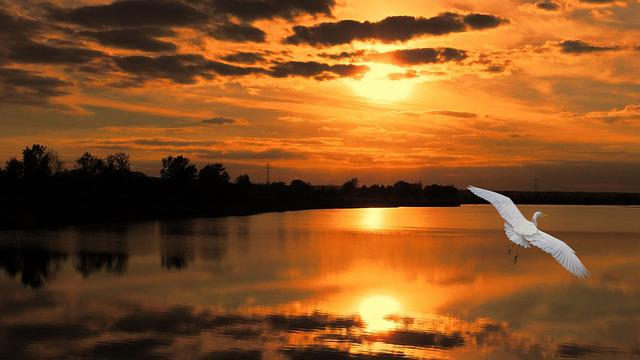 Landscape, Sunset, Bird, Little Egret, Egret, Twilight
