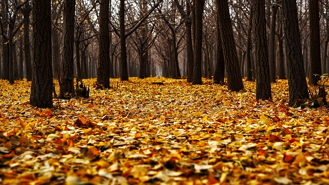 Autumn, Fall, Colorful, Leaves, Landscape, Forest