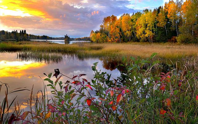 Landscape, Nature, Trees, Water, Fall, Lake, Colors