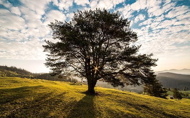 Meadow, Tree, Sunrise, Dawn, Morning, Field, Landscape
