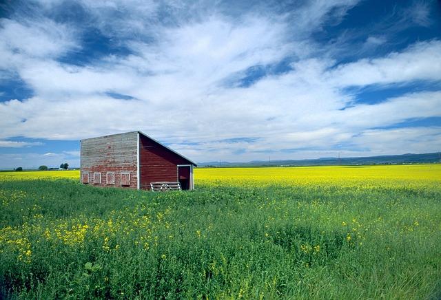 Canola, Farm, Field, Sky, Rural, Landscape, Meadow