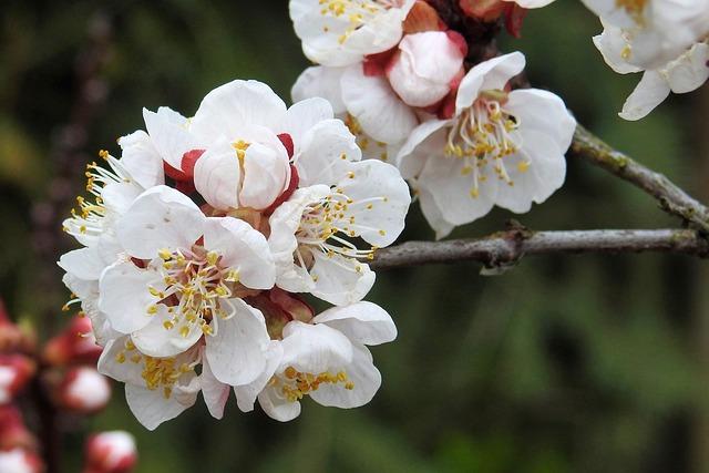 Flowers, Nature, Plant, Tree, Spring, Landscape