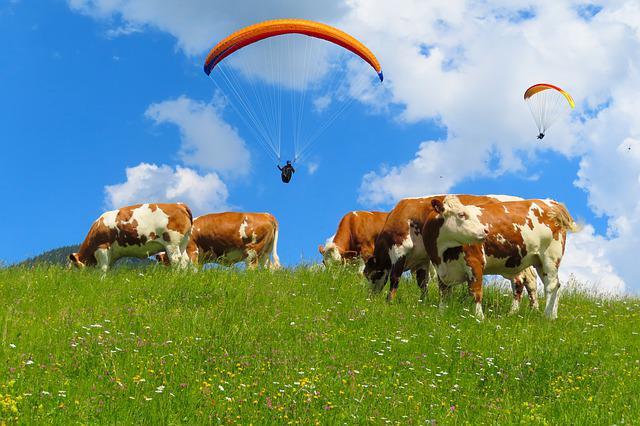 Nature, Landscape, Alm, Cow, Pasture, Meadow, Flying