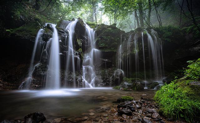 Landscape, A Small Waterfall, Beech Forest, Fog, Plant