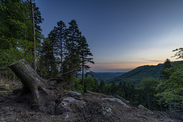 Forest, Sunset, Landscape, Nature, Mountains, Trees