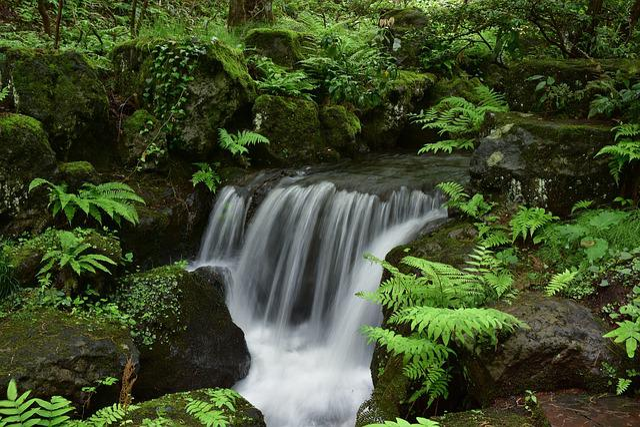 Natural, Landscape, Forest, Wood, Green, Rock, River