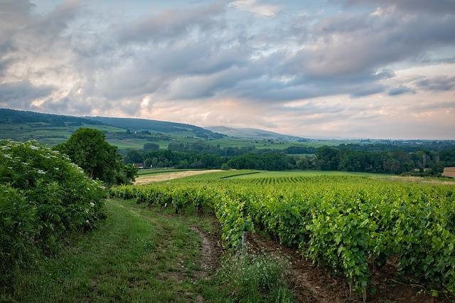 Vineyard, Field, Rural, Burgundy, France, Landscape