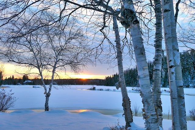 Landscape, Winter, Trees, Birch, White, Sunset, Frozen