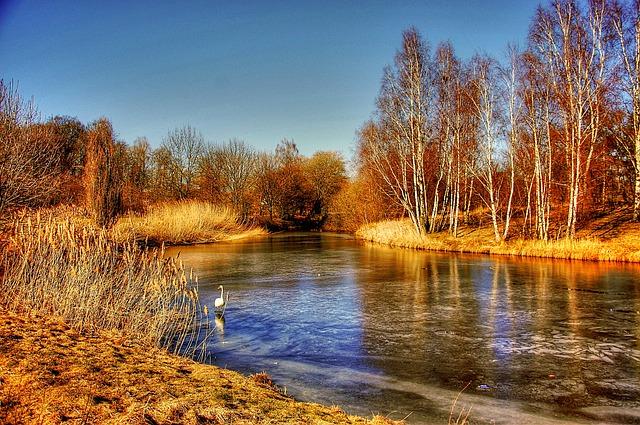 Gifhorn, Mill Lake, Schloßsee, Swan, Trees, Landscape