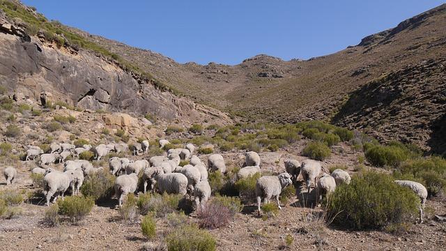 Lesotho, Goats, Landscape, Karg