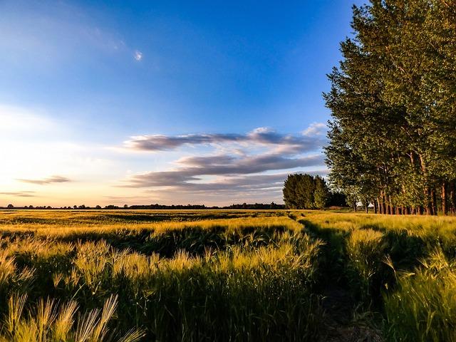 Wheatfield, Sky, Wheat, Landscape, Field, Sowing, Grain