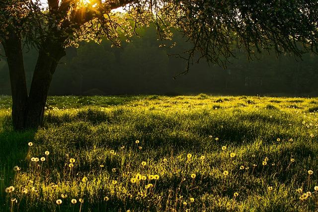 Meadow, Grass, Tree, Landscape, Summer, Green, Flowers