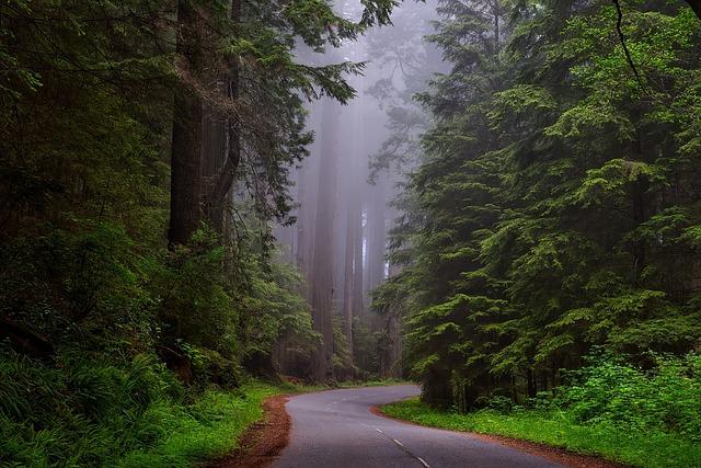 Redwood National Park, California, Hdr, Landscape