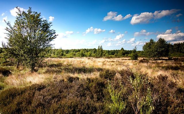 Heide, Drover Heath, Nature, Heather, Landscape