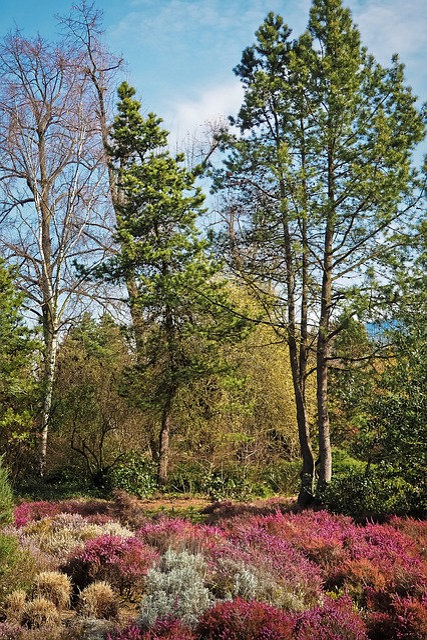 Landscape, Spring, Heide, Heather, Red, Bush, Nature