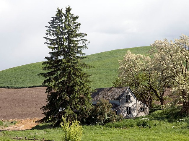 Barn, Old, Abandoned, Idaho, Landscape, Hill, Field