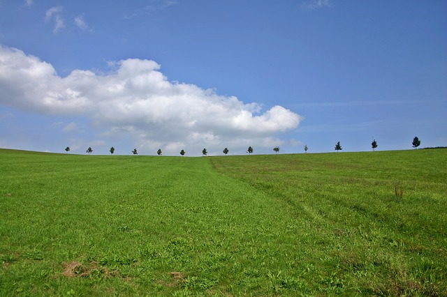 Hill, Trees, Landscape, Row Of Trees, Series, Sky