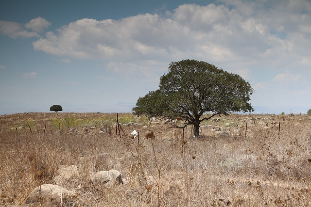 Field And Tree, Golan Heights, Israel, Landscape