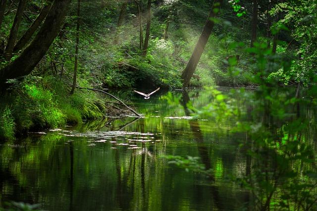 Lake, Forest, Waldsee, Stretching, Nature, Landscape