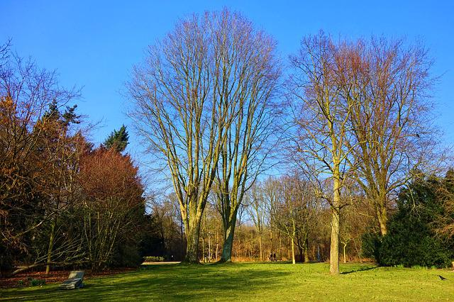 Park, Landscape, Lawn, Grass, Tree, Bare Tree, Winter