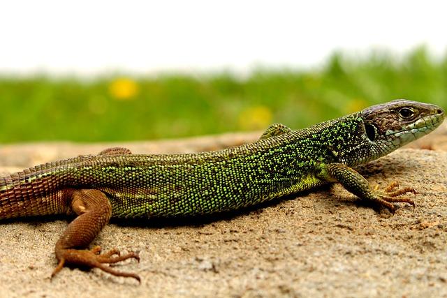 Lizard, Nature, Forest, Wood, Garden, Summer, Landscape