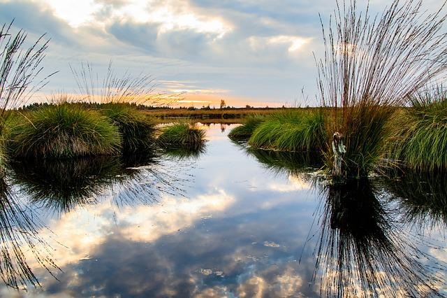 Moor, Swamp, Landscape, Nature, Nature Reserve