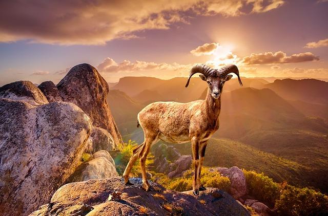 Wildlife, Animal, Rocks, Mountain, Nature, Landscape