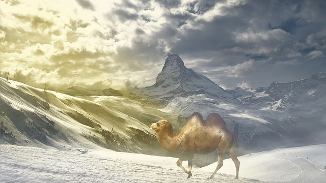 Fantasy, Camel, Snow, Mountains, Landscape, Nevado