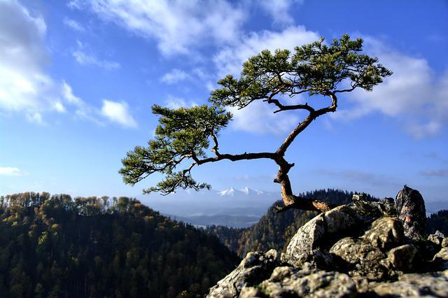 Mountains, Pieniny, Landscape, Poland, Tree, Top