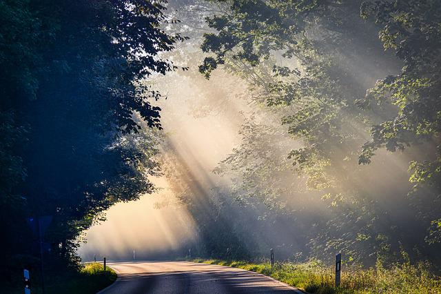 Fog, Sunbeam, Road, Trees, Mood, Landscape, Mystical