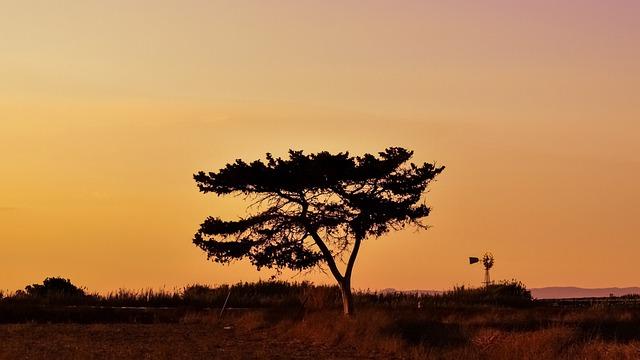 Tree, Sunset, Landscape, Sky, Clouds, Nature, Autumn