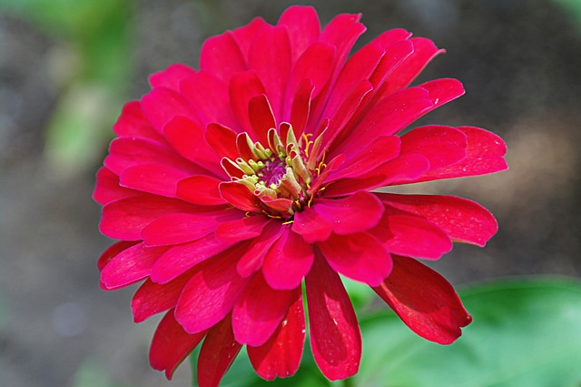 Flowers, Nature, Spring, Bee, Plants, Landscape