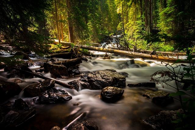 Creek, Forest, Landscape, Nature, Outdoors, River
