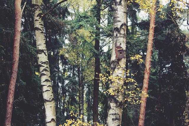 Forest, Trees, Birch, Autumn, Nature, Landscape