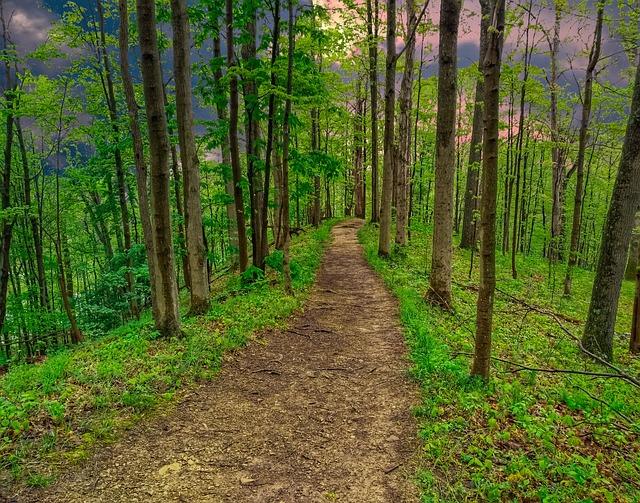 Nature, Landscape, Forest, Outdoor