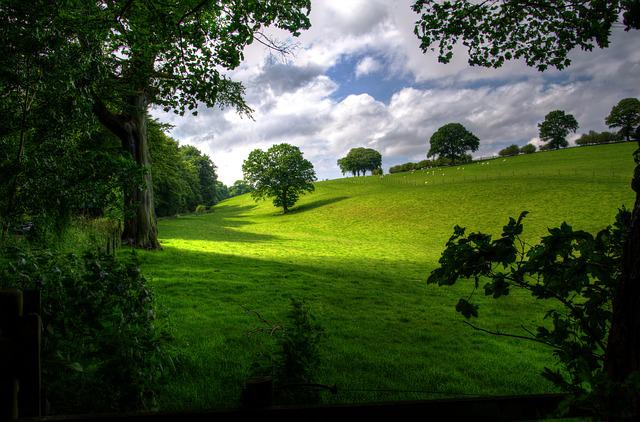 Landscape, Spring, Wood, Scenic, Green, Trees, Nature