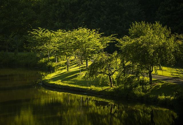 Park, Nature, Virginia, Landscape, Meadow, Sunlight