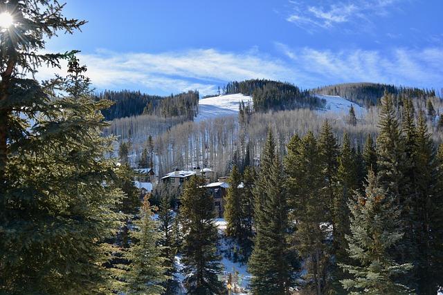 Wood, Tree, Snow, Nature, Landscape, Panoramic