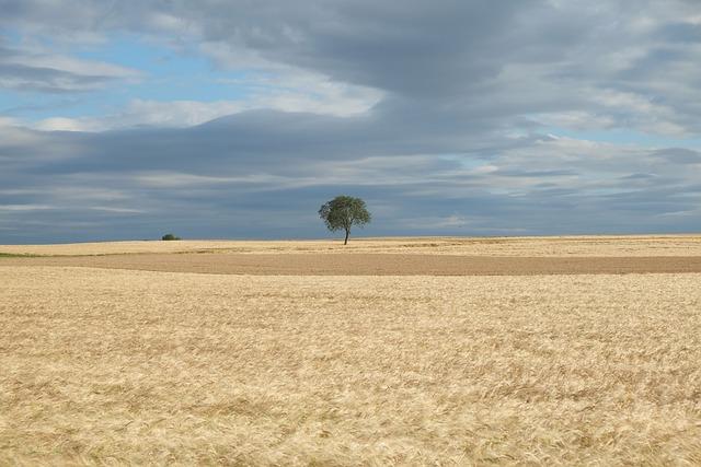 Field, Summer, Nature, Cereals, Landscape, Clouds, Sky